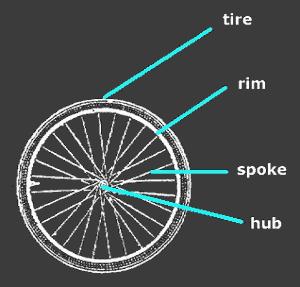 Tire, Rim, Spokes and Hub
